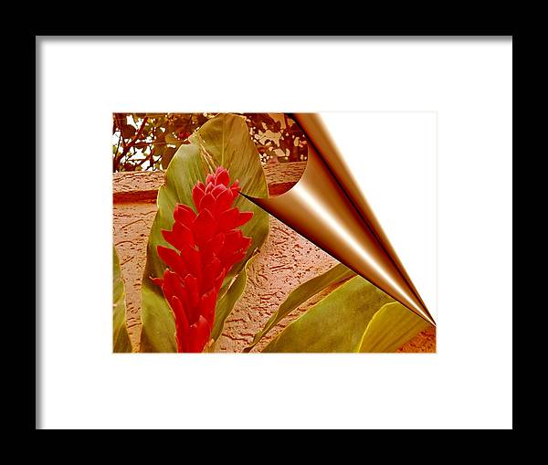 Flower Framed Print featuring the photograph Outside by Beto Machado