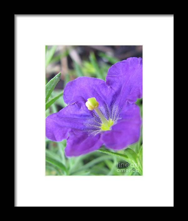 Flower Framed Print featuring the photograph Outstanding Photography by Tina Marie