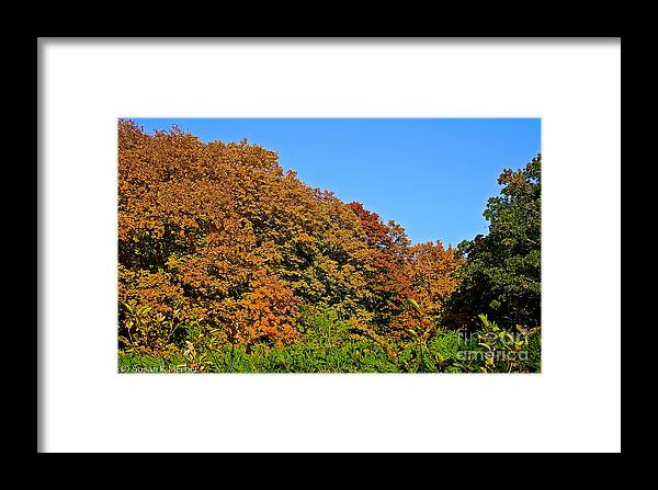 Outdoors Framed Print featuring the photograph Over The Hedge by Susan Herber