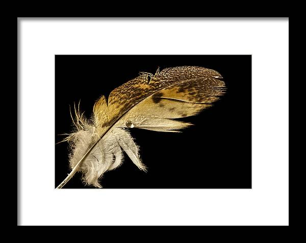 Owl Framed Print featuring the photograph Owl Feather With Water by Jean Noren