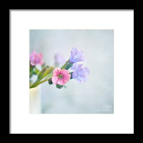 Flowers Framed Print featuring the photograph Pale Pink And Purple Pulmonaria Flowers by Lyn Randle