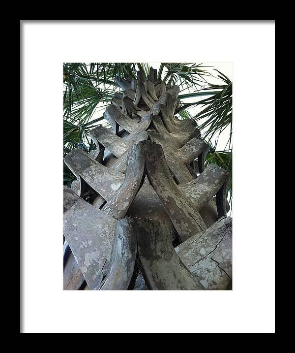 Palm Tree Framed Print featuring the photograph Palm Art by Dayton Preston