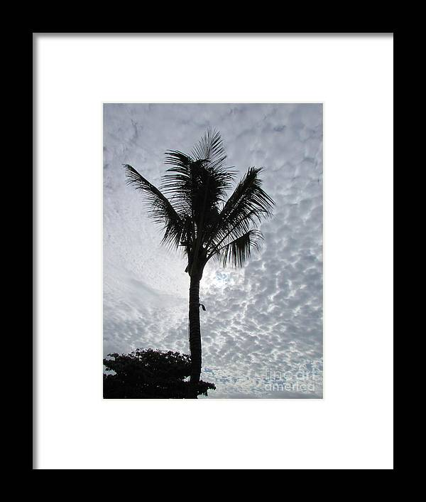 Palm Shadow With Beautiful Clouds Framed Print featuring the photograph Palm Shadow by Rajesh Nagalingum Vythilingum