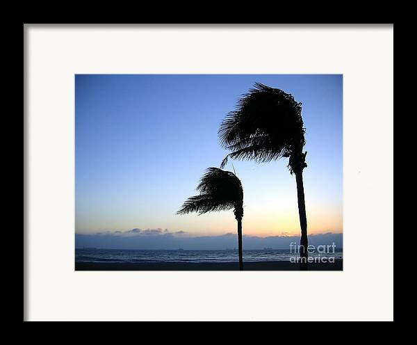 Solitude Framed Print featuring the photograph Palm Trees Swaying In The Wind by Yali Shi