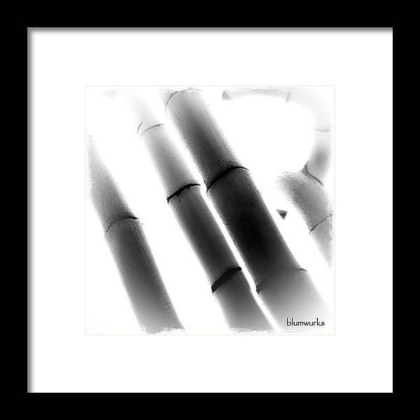 Blumwurks Framed Print featuring the photograph Panda Candy by Matthew Blum