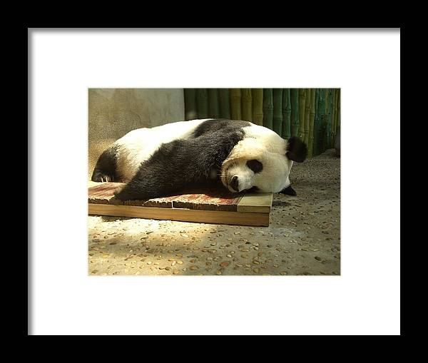 Panda Framed Print featuring the photograph Panda by Roman Anuchkin