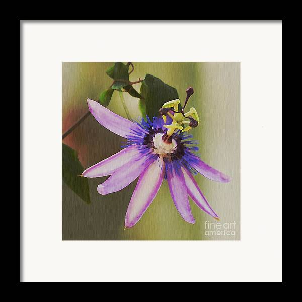 Passion Flower Framed Print featuring the painting Passion Flower by Artist and Photographer Laura Wrede