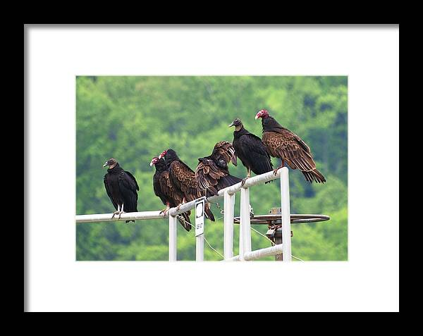 Birds Framed Print featuring the photograph Patience by Richard DeYoung