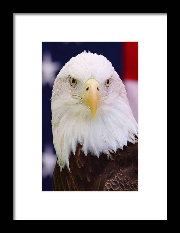 Bald Eagle Framed Print featuring the photograph Patriotic Stare by Andrew McInnes