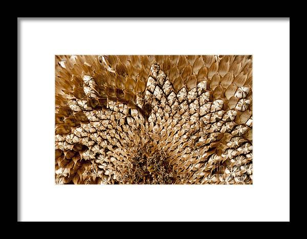Harvest Framed Print featuring the photograph Patterns by Wilma Birdwell