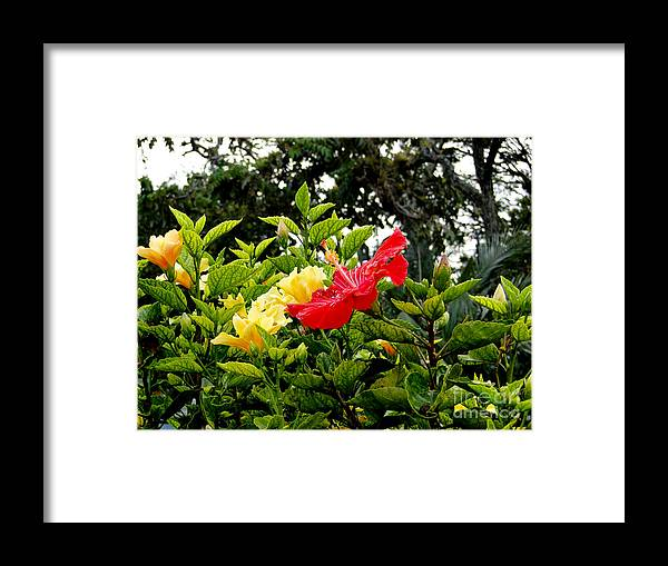 Al Bourassa Framed Print featuring the photograph Paute Farm Flowers by Al Bourassa