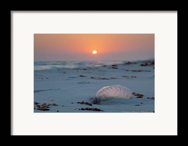 Beach Framed Print featuring the photograph Peaceful Man Of War by Charles Warren