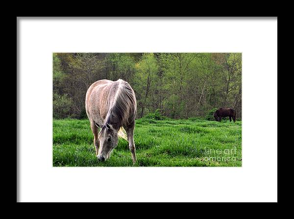 Horses Framed Print featuring the photograph Peaceful Pasture by Lydia Holly