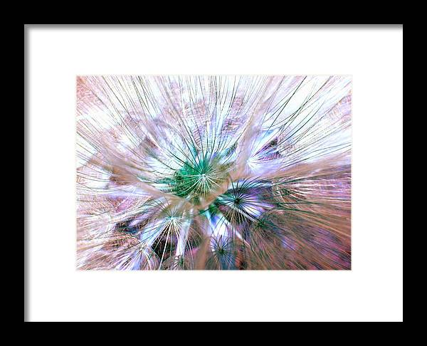 Dandelion Framed Print featuring the photograph Peacock Dandelion - Macro Photography by Marianna Mills