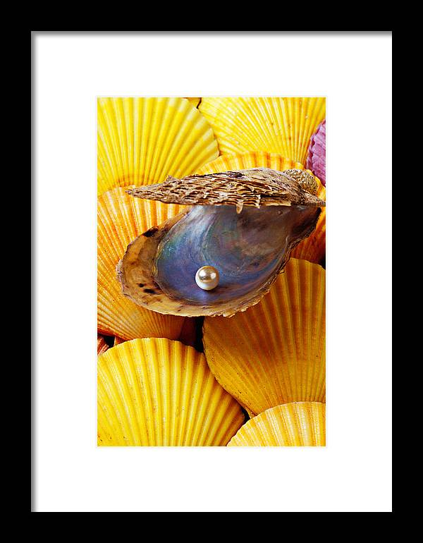 Pearl Framed Print featuring the photograph Pearl In Oyster Shell by Garry Gay