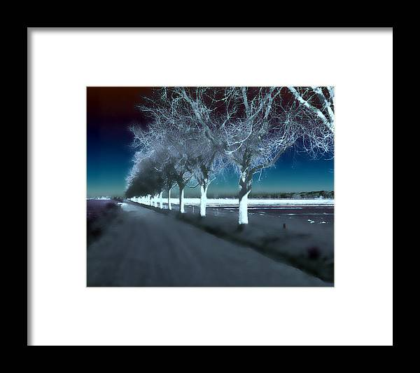 Trees Framed Print featuring the photograph Pecan Trees by Jim Painter