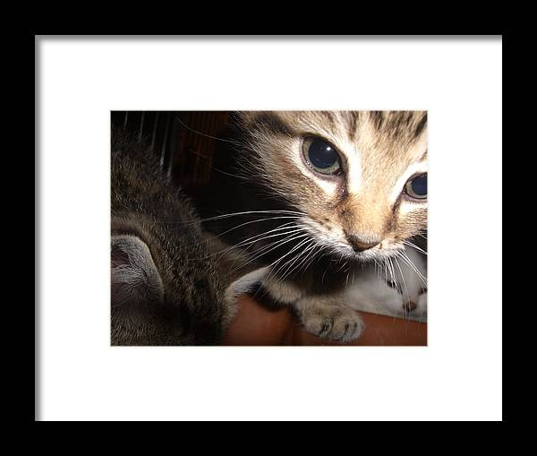 Cat Framed Print featuring the photograph Peek-a-boo by Kendra Keryluk