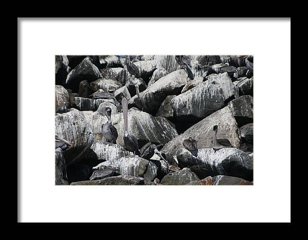 Ocean Framed Print featuring the photograph Pelican Camoflage by Mel White Photo