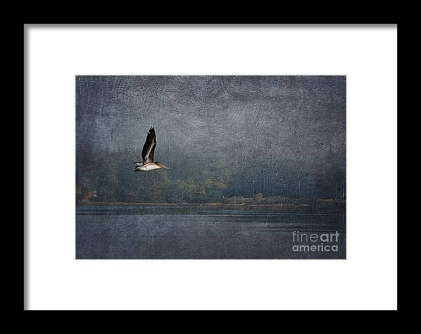 Coos Bay Framed Print featuring the photograph Pelican II by Billie-Jo Miller