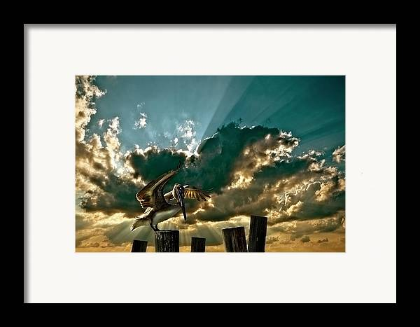 Pelican Framed Print featuring the photograph Pelican Sky by Meirion Matthias