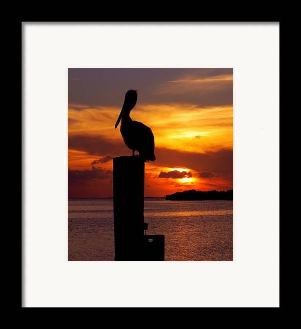 Sunsets Framed Print featuring the photograph Pelican Sundown by Karen Wiles