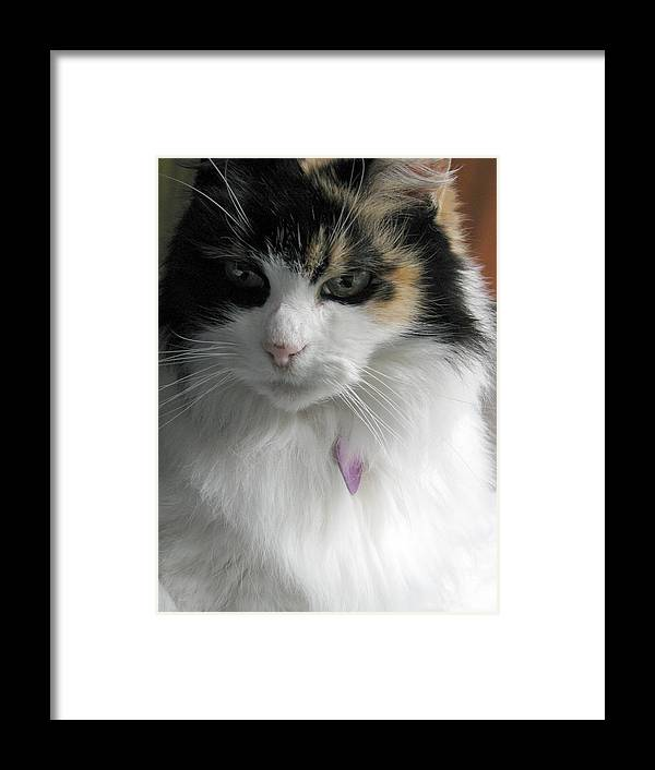 Cat Framed Print featuring the photograph Pensive by Rory Sagner