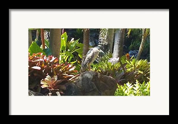 Birds Framed Print featuring the photograph Perched Bird by Silvie Kendall
