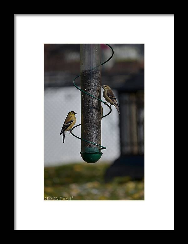 Birds Framed Print featuring the photograph Perfect Day by Aryan Ganji
