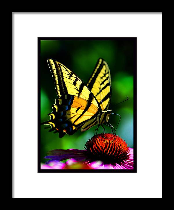Medicinal Plants Framed Print featuring the photograph Perfect Landing by Susanne Still