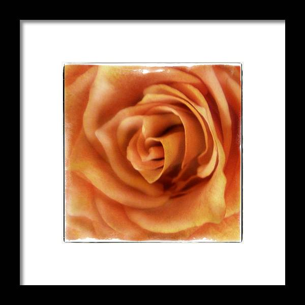 Rose Framed Print featuring the photograph Perfection In Peach by Tanya Jacobson-Smith