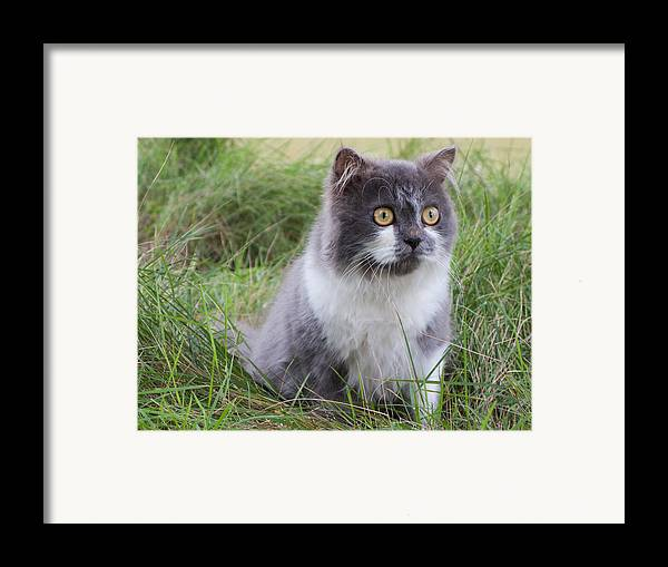 Adorable Framed Print featuring the photograph Persian Cat Sit In Green Yard by Nawarat Namphon