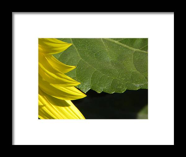 Flower Framed Print featuring the photograph Perspective by Michael Snyder
