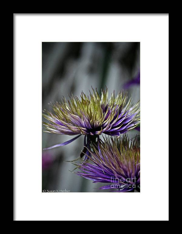 Garden Framed Print featuring the photograph Petal Freedom by Susan Herber