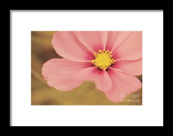 Flower Framed Print featuring the photograph Petaline - P05a by Variance Collections