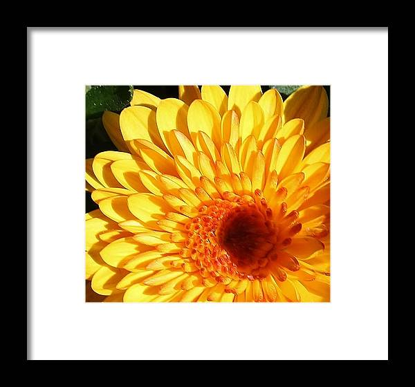 Flora Framed Print featuring the photograph Petals Of Yellow by Bruce Bley