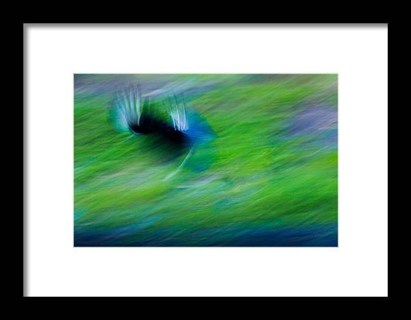 Birds Framed Print featuring the photograph Phantom Flight by Marx Broszio