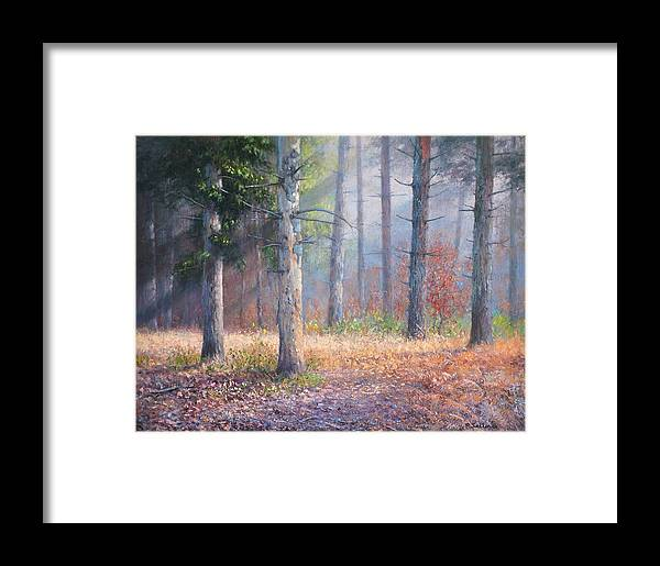 Forest Pinetrees Sunrays Woods Framed Print featuring the painting Pinewoods by Richard Sellence