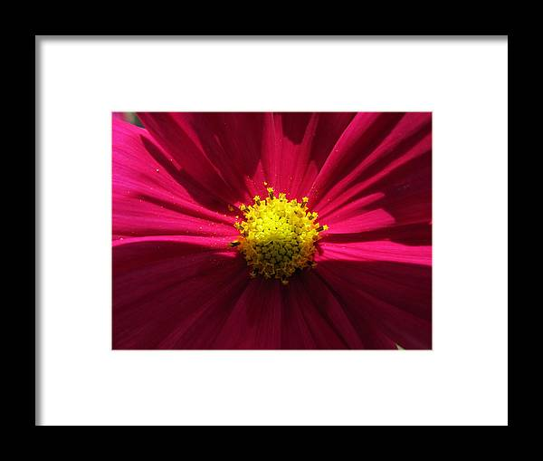 Flowers Framed Print featuring the photograph Pink Beauty by Tina M Wenger