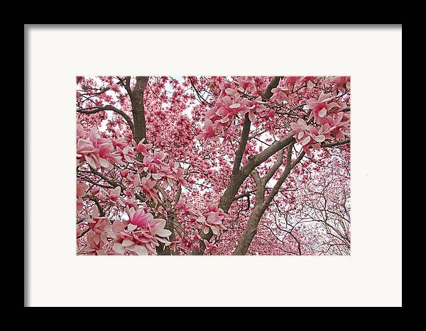 Becky Framed Print featuring the photograph Pink Everywhere by Becky Lodes