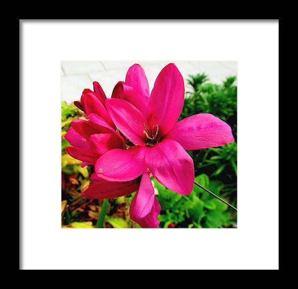 Flower Framed Print featuring the photograph Pink Flower by Joyce Woodhouse