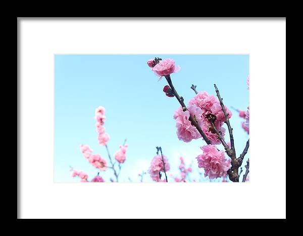Flowers Framed Print featuring the photograph Pink Flowers by Allen Jiang