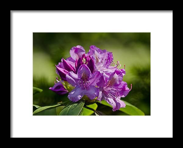 Usa Framed Print featuring the photograph Pink Petals On The Trail by LeeAnn McLaneGoetz McLaneGoetzStudioLLCcom