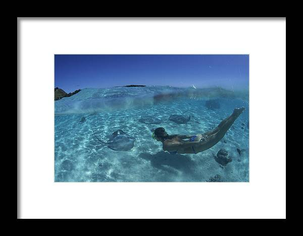 Pink Whipray Framed Print featuring the photograph Pink Whiprays by Alexis Rosenfeld