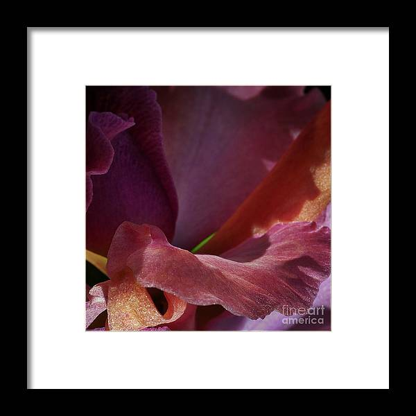 Framed Print featuring the photograph Placenta by Jacques ISMAEL