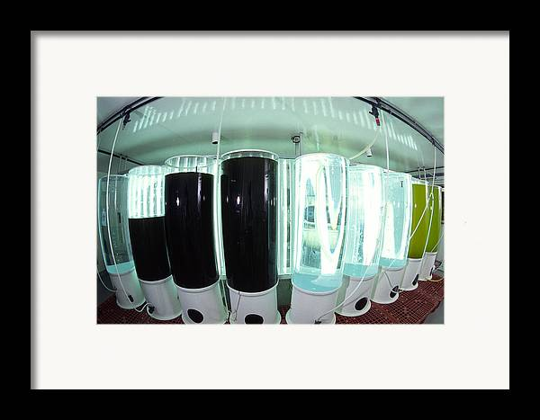 Plankton Framed Print featuring the photograph Plankton Research by Alexis Rosenfeld