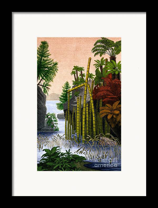 Science Framed Print featuring the photograph Plants Of The Triassic Period by Science Source