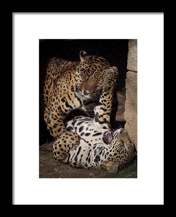 Animals Framed Print featuring the photograph Play Time by Cheri McEachin