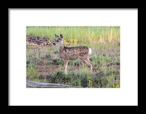 Bryce Canyon Framed Print featuring the photograph Playful Curiosity by James Marvin Phelps