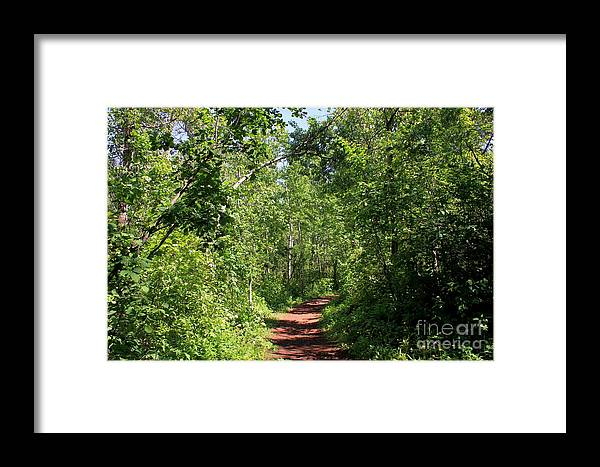Trees Framed Print featuring the photograph Pleasant Trail by Jim Sauchyn