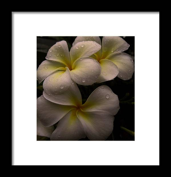 Plumeria Framed Print featuring the photograph Plumeria by Dorothy Cunningham